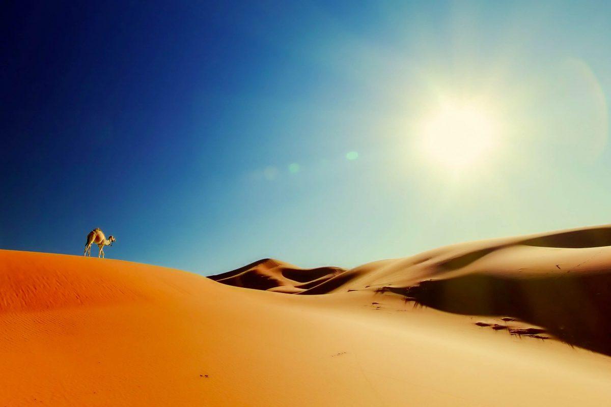 Die ersten Ausflüge in die Sahara sollten unbedingt von einem professionellem Führer begleitet werden - © Saida Shigapova / Shutterstock