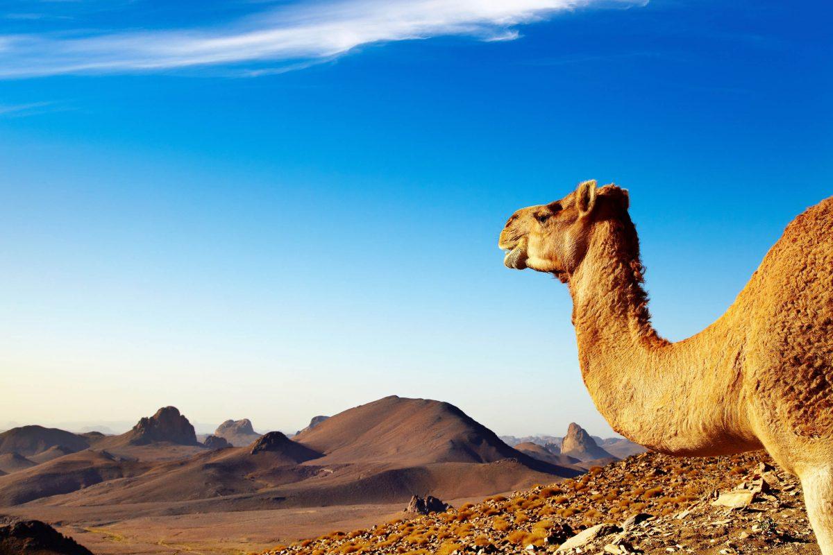Die gewaltige Sahara erstreckt sich von der Atlantikküste Afrikas bis zum Roten Meer auf einer Flächer von neun Millionen Quadratkilometern - © Pichugin Dmitry / Shutterstock