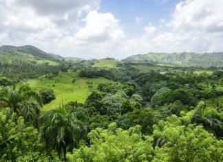Die Landschaft um den Pico Duarte in der Dominikanischen Republik verspricht Regenwald-Feeling pur - © Cynthia Farmer / Shutterstock