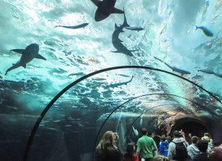 Im National Aquarium von Santo Domingo sind Meeresschildkröten, Seekühe, Rochen, Haie und zahlreiche andere karibische Meeresbewohner zu sehen, Dominikanische Republik - © steve estvanik / Shutterstock