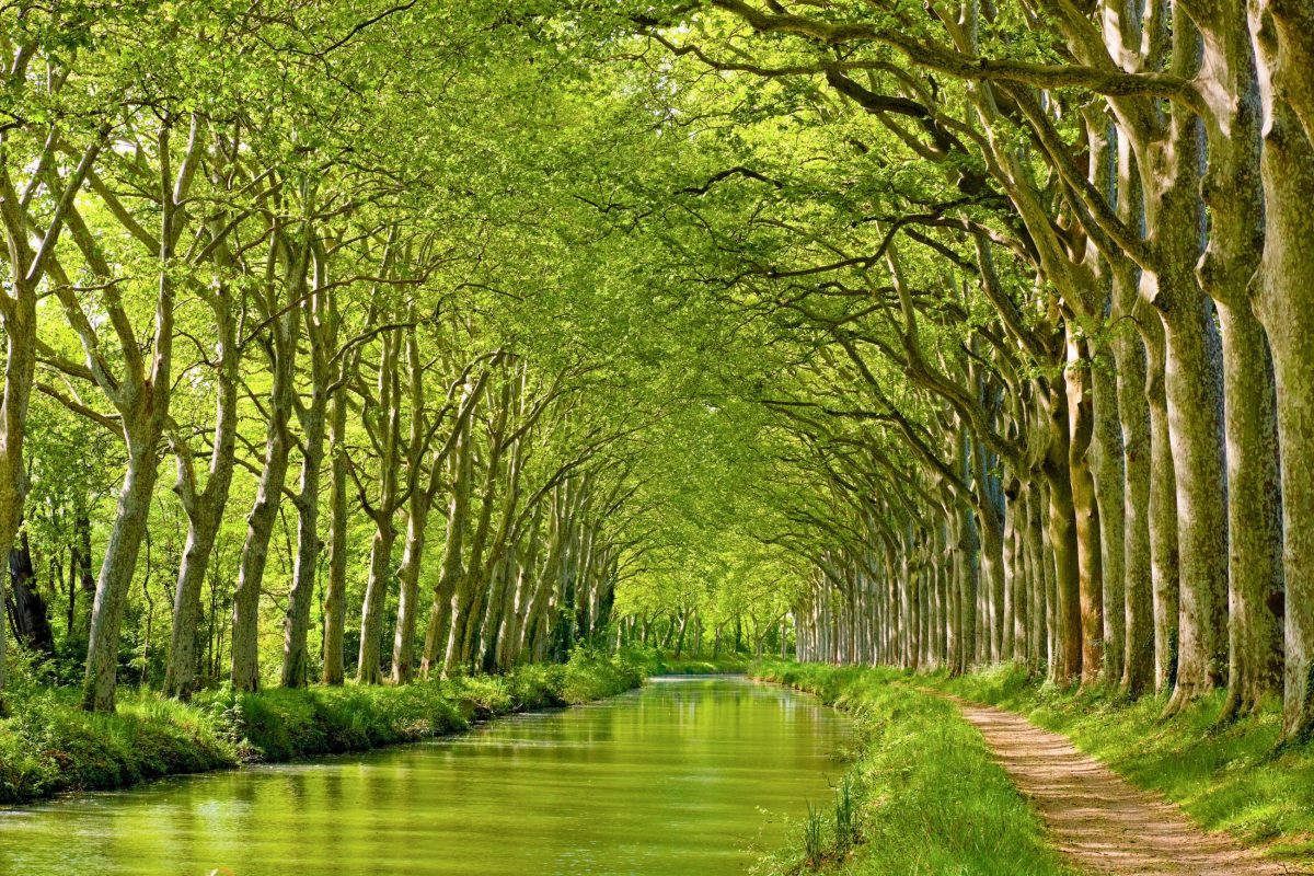 42.000 Platanen am Ufer verleihen dem Canal du Midi in Toulouse ein unverwechselbares Flair, Frankreich - © Yuryev Pavel / Shutterstock