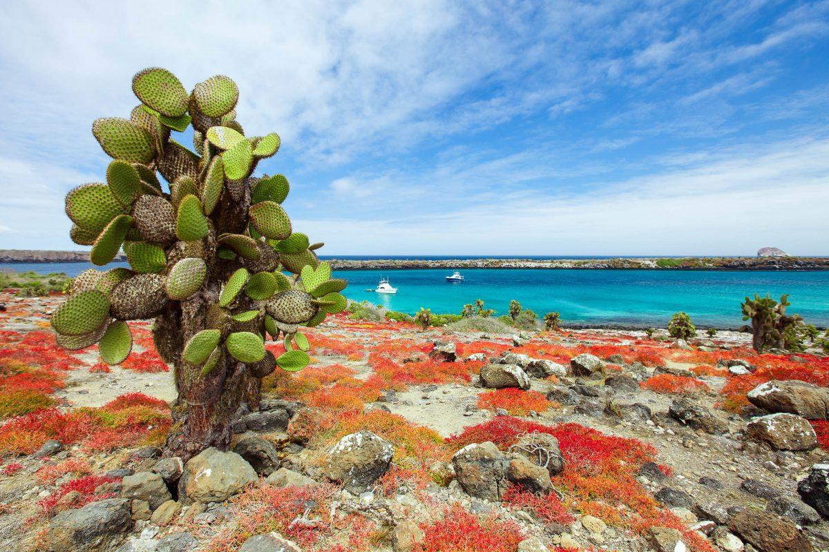 Eine wunderschöne und einmalig unberührte Landschaft erwartet die Besucher auf den Galapagosinseln - © BlueOrange Studio / Fotolia