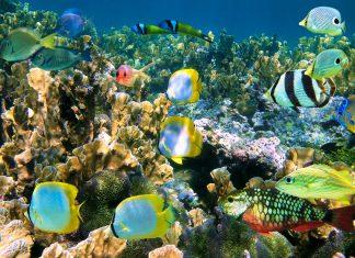 Für jeden Taucher auf Guadeloupe ist eine Unterwasser-Tour im Jaques Cousteau Marine Reservé ein absolutes Muss - © Vilainecrevette / Shutterstock