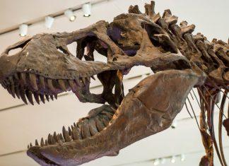 Das Prehistoric Life ist mit seinen Dinosauriern und anderen urzeitlichen Tieren ein absolutes Highlight bei den Kids, National Science Center in Delhi, Indien - © James Camel / franks-travelbox