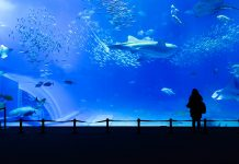 Das Okinawa-Churaumi-Aquarium hält den weltweiten Rekord des größten Salzwasser-Aquariums, Japan - © leungchopan / Fotolia