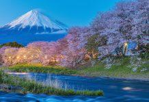 Die japanischen Kirschblüten bilden den perfekten Rahmen für Japans höchsten Berg Fuji - © skyearth / Shutterstock