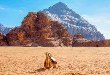 Die Erkundung des Wadi Rum erfolgt am besten mit dem Geländewagen, kann aber auch auf dem Rücken eines Kamels erfolgen, Jordanien - © flog / franks-travelbox