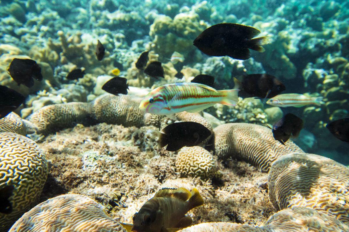 Farbenprächtige Fische im glasklaren Wasser des Golf von Aqaba im Norden des Roten Meers, Jordanien - © Zbyszek Nowak / Fotolia