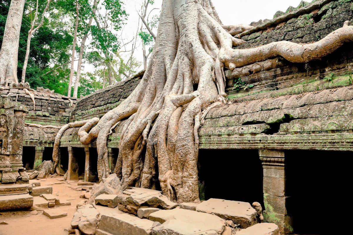 Die eindrucksvolle Tempelstätte Angkor Wat befindet sich etwa 20km nördlich des riesigen Sees Tonle Sap, Kambodscha - © qingqing / Shutterstock