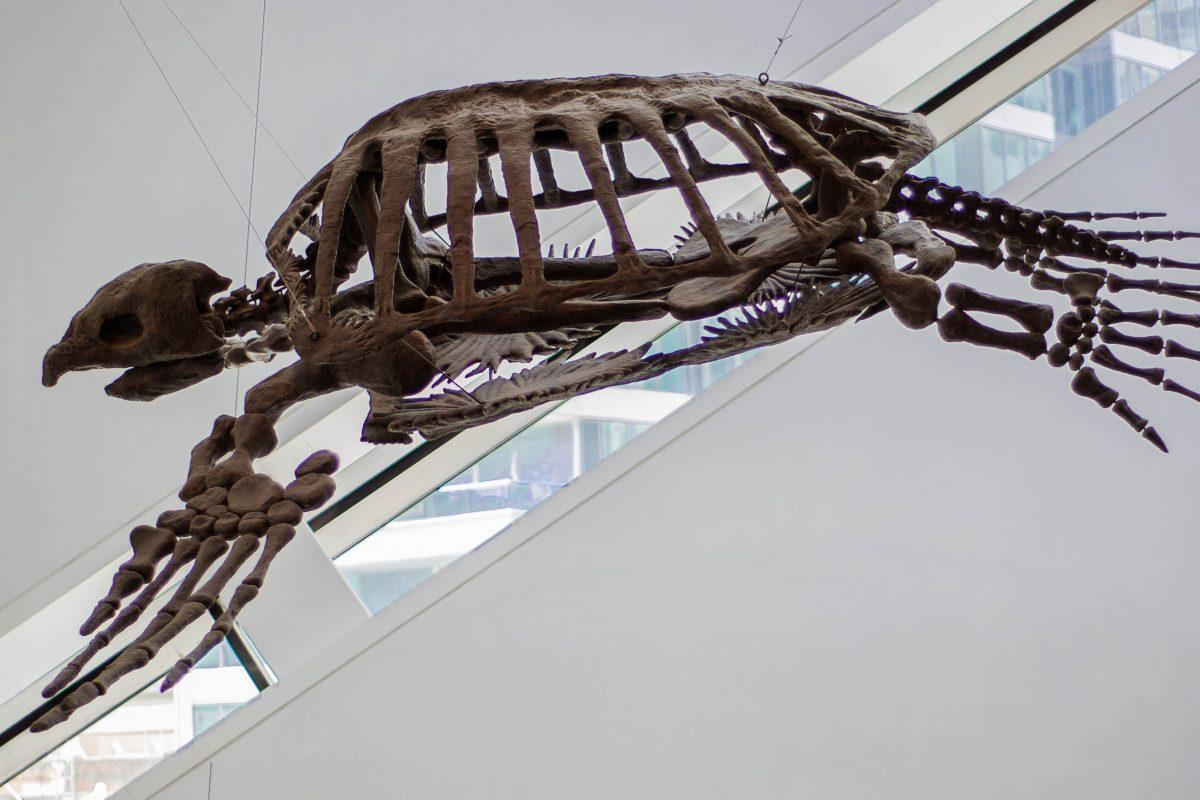 Skelett einer urzeitlichen Riesenschildkröte im Royal-Ontario-Museum in Toronto, Kanada - © James Camel / franks-travelbox