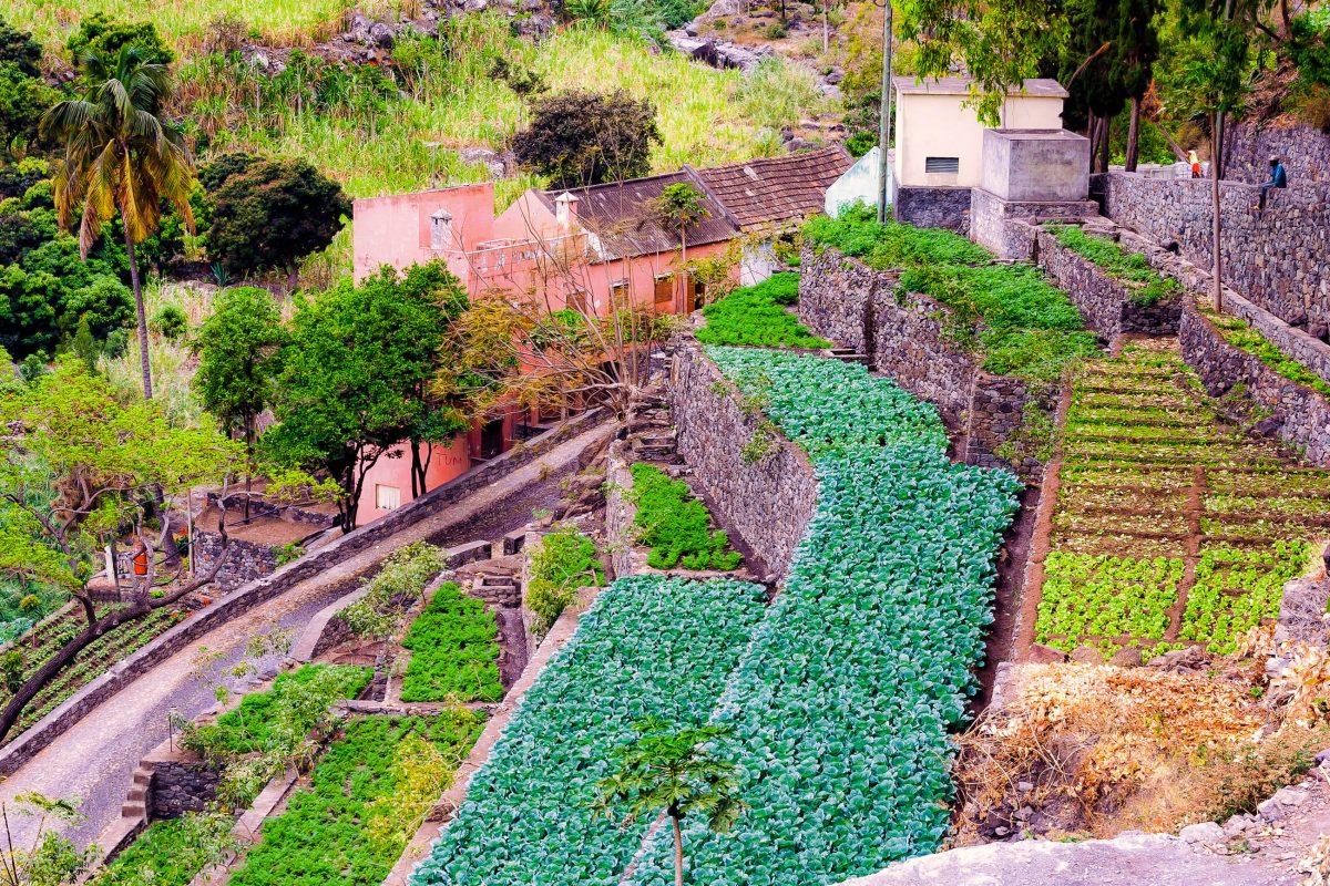 Auf der gebirgigen Insel Santo Antão kann Landwirtschaft ausschließlich auf Terrassenfeldern betrieben werden, Kap Verde - © Frank Bach / Shutterstock