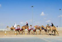 Al Sheehaniya ist das Zentrum des Kamelrennsports in Katar; Ställe, Koppeln und Zuchthäuser werden mit einer 10km langen Rennbahn inkl. Tribüne komplettiert - © FRASHO / franks-travelbox