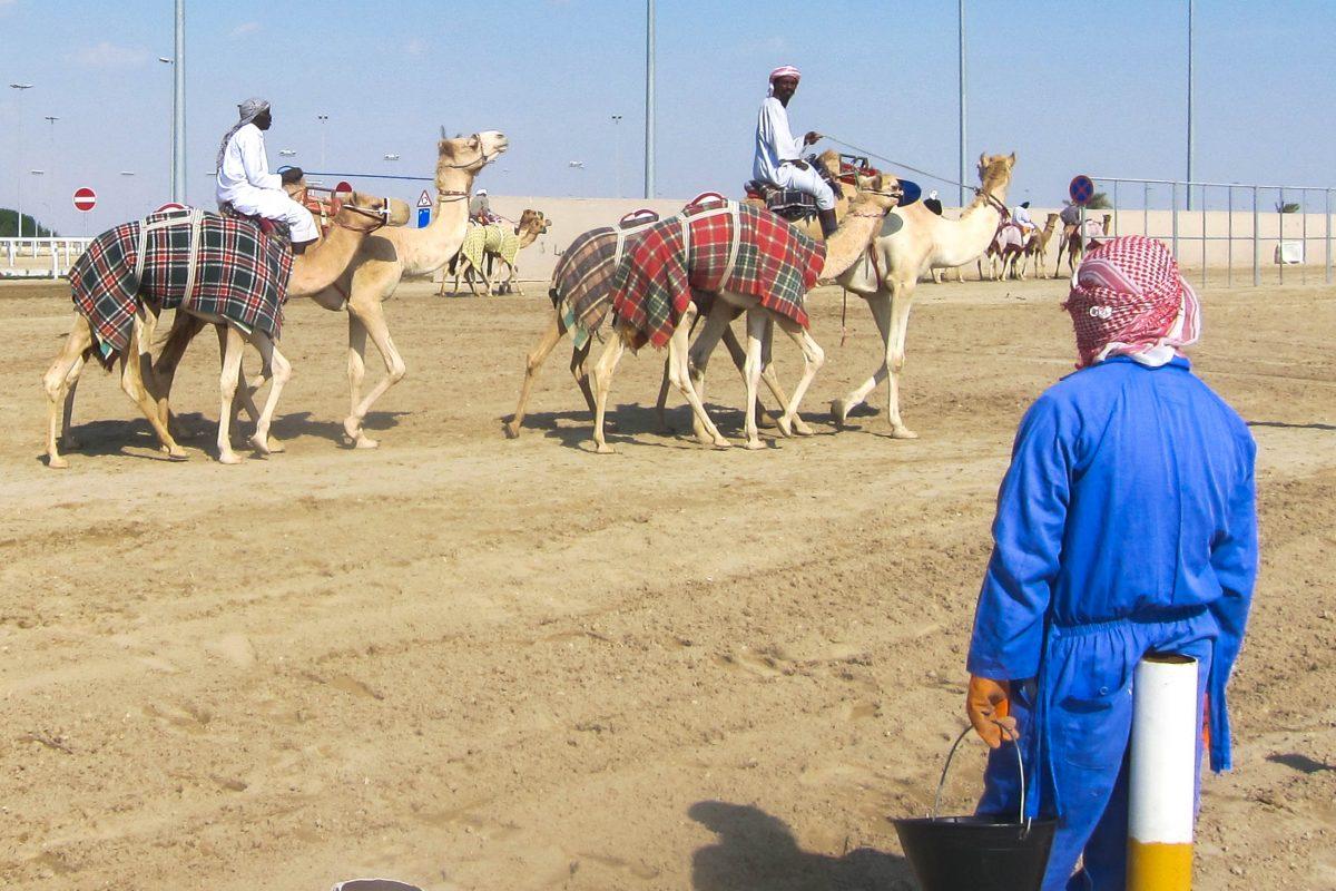 Empfehlenswert ist ein Besuch der Kamelrennbahn am frühen Vormittag, wenn es noch nicht zu heiß ist und Trainingsläufe stattfinden, Qatar - © FRASHO / franks-travelbox