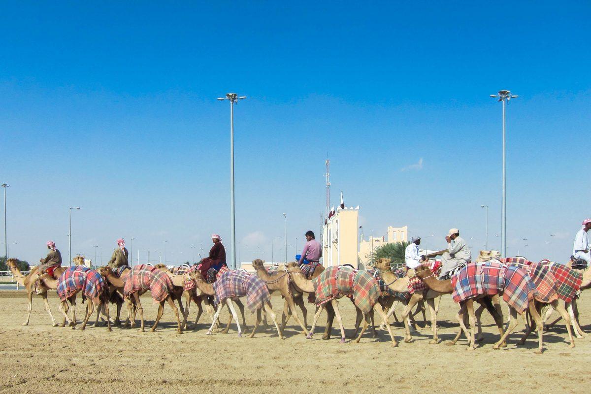 """In einer eigenen """"Camel City"""" leben das ganze Jahr über tausend Kamele und ihre Betreuer, Qatar - © FRASHO / franks-travelbox"""