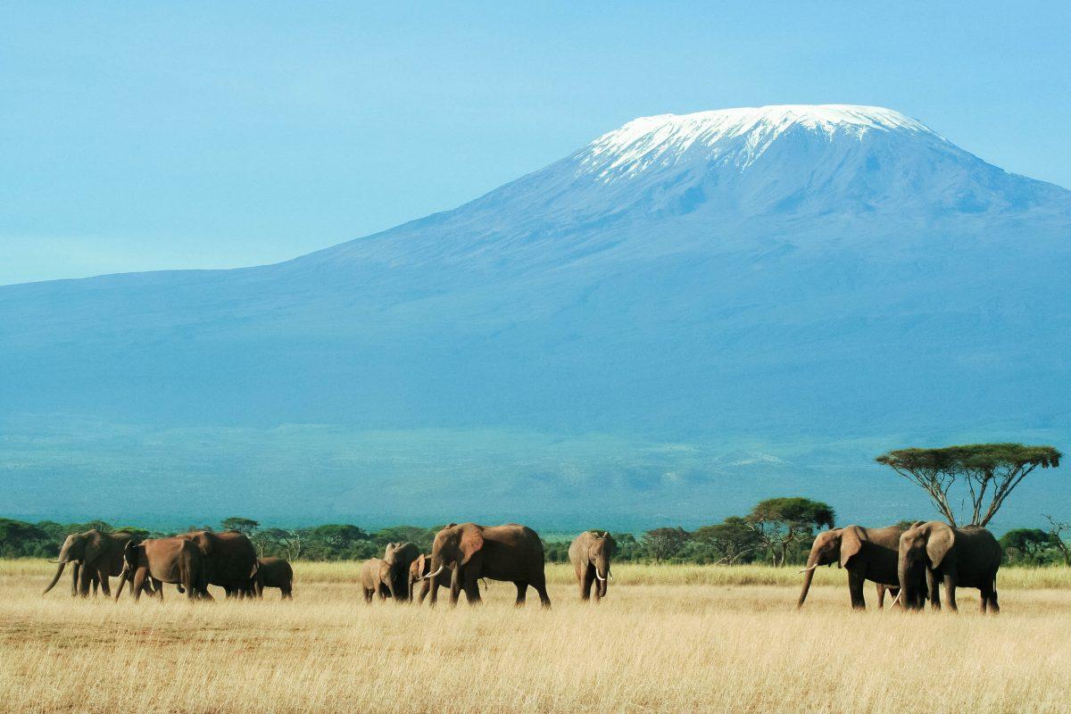 Der Amboseli-Nationalpark in Kenia am Fuß des Kilimandscharo ist der beste Ort, um Elefanten in ihren völlig natürlichen Famlienbündnissen zu beobachten - © Graeme Shannon/Shutterstock
