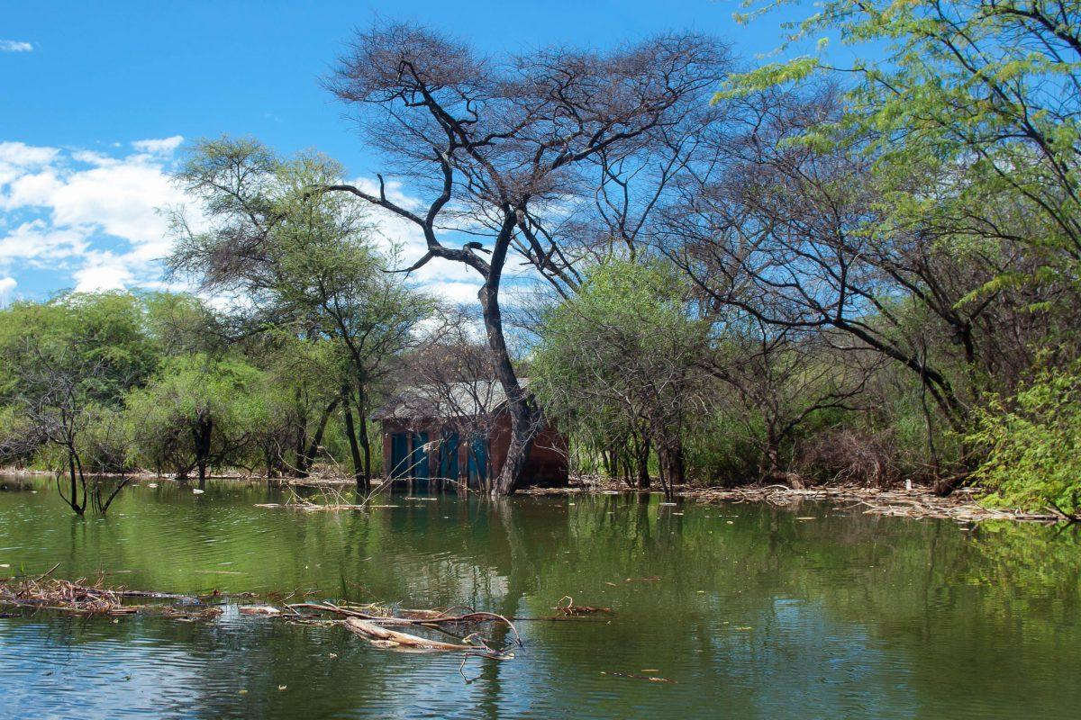 Die weitläufige Wasserfläche des Baringo-Sees in Kenia mit der interessanten Vegetation an seinen Ufern bietet vor allem bei Sonnenuntergang traumhafte Fotomotive - © Byelikova Oksana / Shutterstock