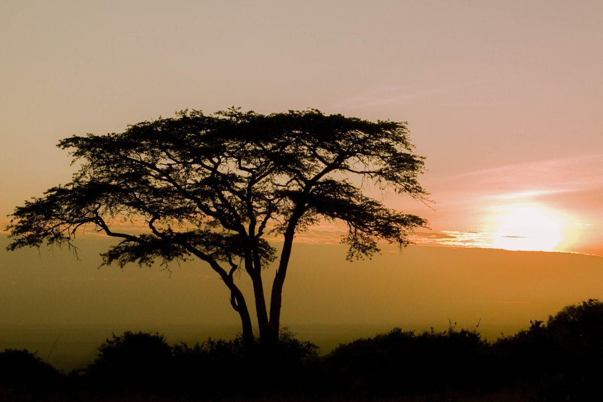 Nur 7km von der Hauptstadt Kenias entfernt findet man im Nairobi Nationalpark die perfekte afrikanische Idylle - © Africanmoose / Shutterstock
