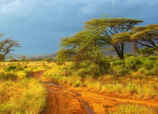 Typische afrikanische Landschaft mit roter Erde und Schirmakazien - hier im Samburu Nationalpark in Kenia - © Piotr Gatlik / Shutterstock