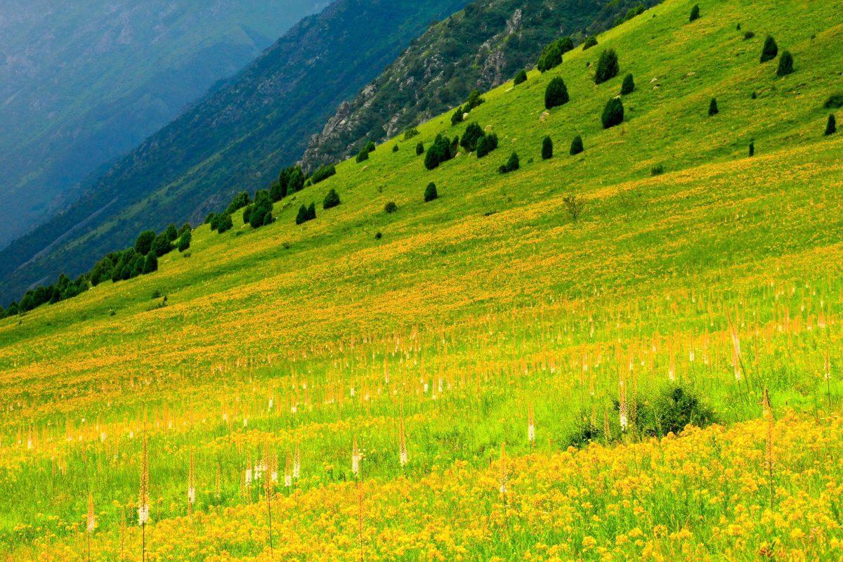 Im Sommer sind die Hänge der Berge im Ala-Archa-Nationalpark von üppig grünen Wiesen gesäumt, Kirgistan - © Natalia Davidovich / Shutterstock