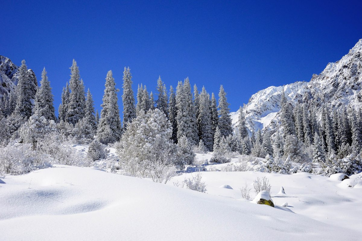 Im Winter verschwindet der Ala-Archa-Nationalpark unter eine dichten Schneedecke, Kirgistan - © Djusha / Shutterstock
