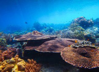 Die Phönix-Inseln in der Südsee sind seit 2006 Meeresschutzgebiet und zählen seit 2010 zum Weltnaturerbe der UNESCO, Kiribati - © Dudarev Mikhail / Shutterstock