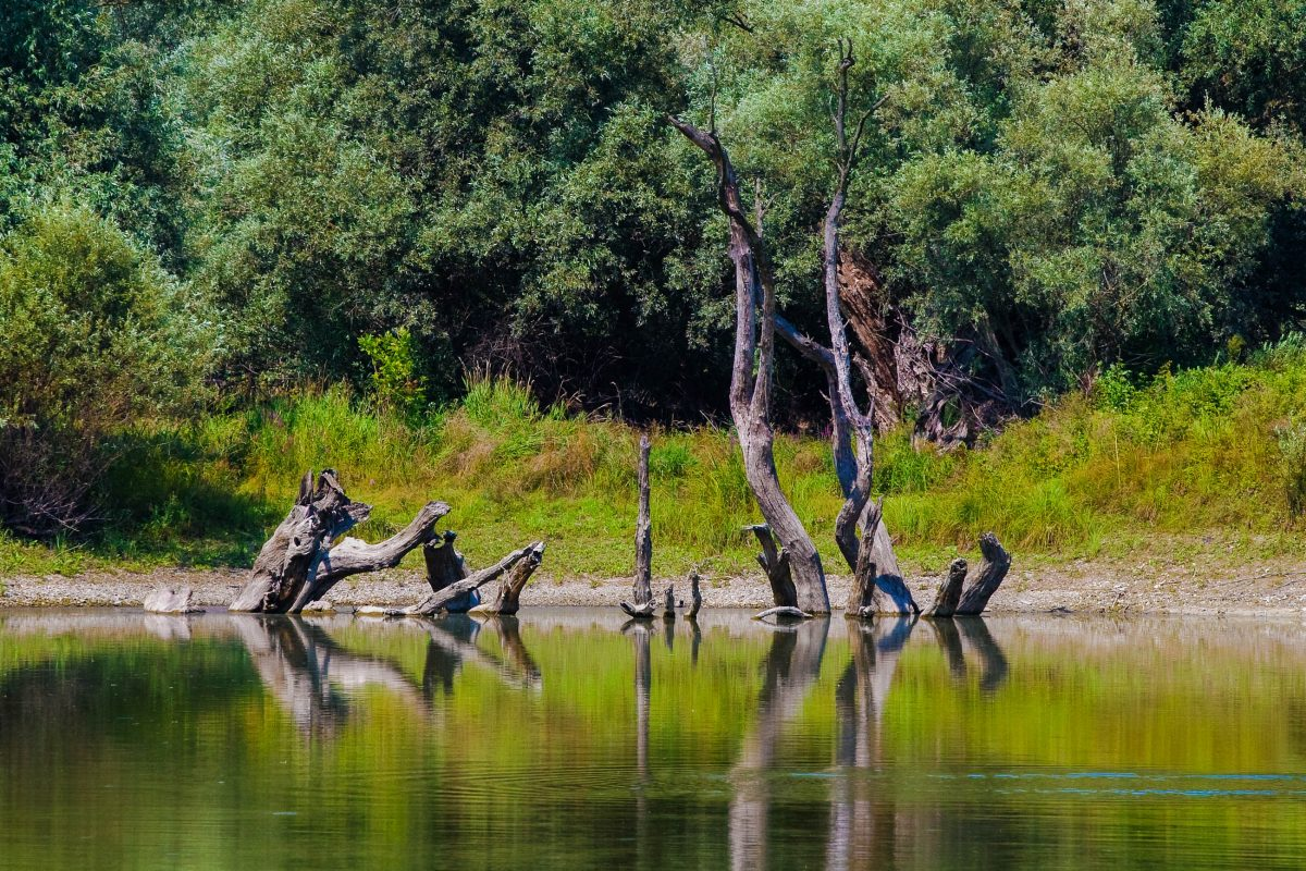 Wanderungen, Radausflüge und Panorama-Touren mit dem Boot oder auf dem Pferderücken offenbaren die unberührte Idylle des Kopački Rit, Kroatien - © Renato Pejkovic / Shutterstock