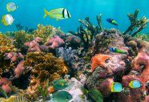 Tropische Fische in einem der weltweit spektakulärsten Unterwasserparadiese, Jardines de la Reina, Kuba - © vilainecrevette / Fotolia