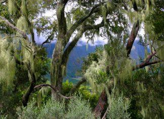 Der Forêt de Bébour ist traumhafter Urwald auf der französischen Insel La Réunion auf einer Höhe von etwa 1.300 Metern - © michelecaminati / Shutterstock