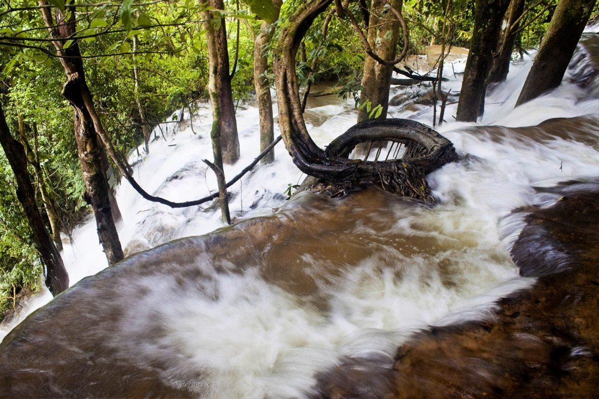 Auf einem steilen Hügel beginnen die Wassermassen des Kuang Si in Laos bereits, durch die Bäumen nach unten zu stürzen - © M R / Shutterstock