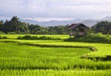 Der Nam Ha Nationalpark befindet sich in der Luang Namtha Region im Nordwesten des Landes und ist der zweitgrößte und meistbesuchte Naturpark in Laos - © Anthon Jackson / Shutterstock