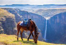 Ein Pony aus dem nahegelegenen Basotho-Dorf Semonkong grast an der Klippe zum Maletsunyane-Wasserfall in Lesotho - © Fabian Plock / Shutterstock