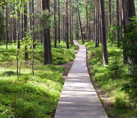 Holzpfad im Wald - © Janis Smits / Shutterstock