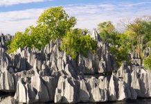 Die felsige Oberfläche des Plateaus des Tsingy de Bemaraha-Nationalparks ist teilweise mit dem einzigartigen madagassischen Trockenwald bedeckt, Madagaskar - © Pierre-Yves Babelon / Fotolia