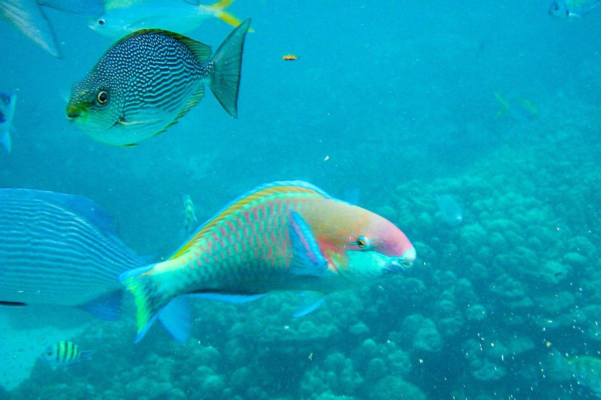 Fische im Pulau Payar Marine Park, Malaysia - © seanlean / Shutterstock