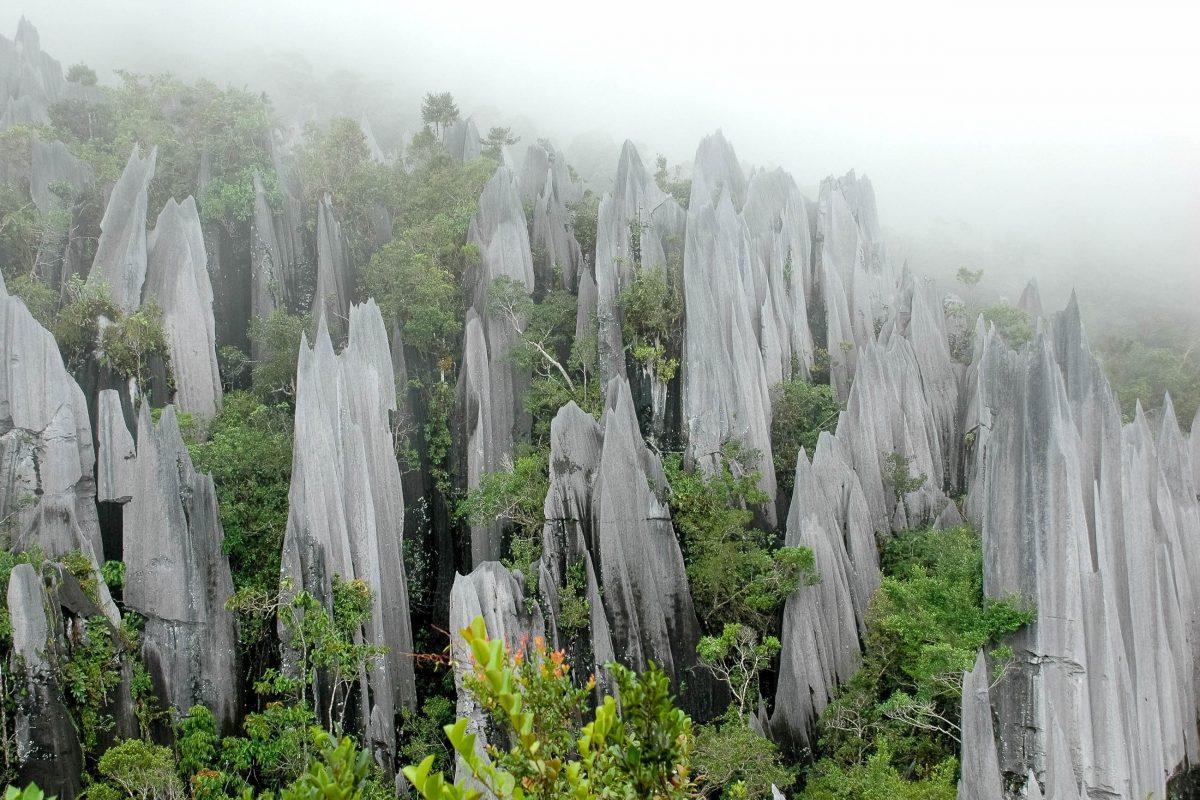 Zerklüftete knapp 50m hohe Verkarstungen auf den bewaldeten Hügeln des Gunung Api, Nationalpark Gunung Mulu, Malaysia - © Rafal Gaweda / Shutterstock