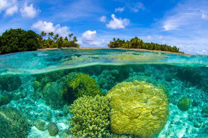 Die einzigartige Unterwasserwelt des Majuro-Atolls der Marshall-Inseln zieht eine Vielzahl an Tauchern an - © Luiz A. Rocha / Shutterstock
