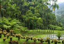 Der botanische Garten von Balata wurde Ende des 20. Jahrhunderts angelegt und zählt zu den schönsten Gärten der Karibik, Martinique - © Pack-Shot / Shutterstock