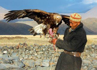 EIn kasachischer Adlerjäger, Golden Eagle Festival, Mongolei - © Tomas1111 / Shutterstock