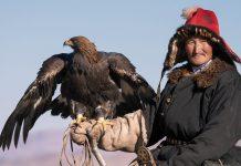 Zu den Aufgaben der perfekt trainierten Steinadler zählen unter anderem das Fangen von Fuchspelzen oder Hasenfellen, die meist an ein galoppierendes Pferd gebunden sind, Golden Eagle Festival, Mongolei - © Pichugin Dmitry / Shutterstock