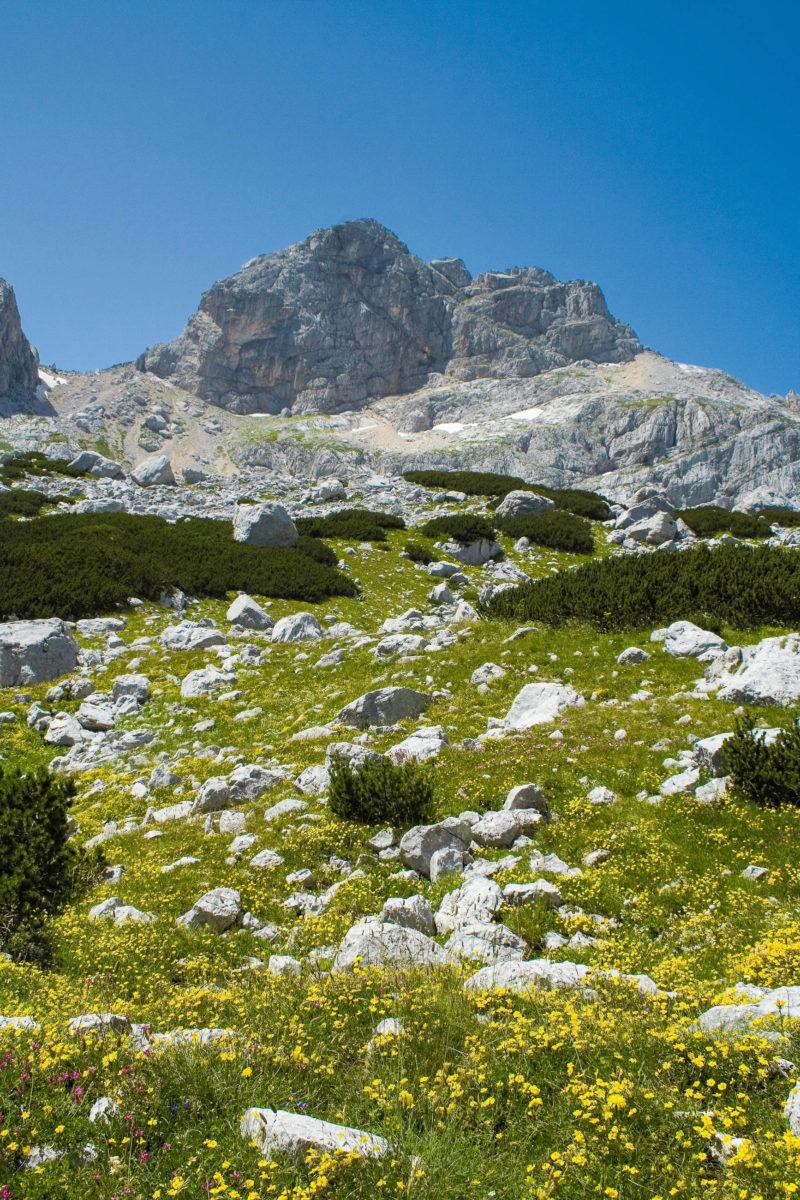 Die Pfade auf den Bobotov Kuk führen anfänglich noch durch grüne Wiesen, die rasch von Karstfeldern und schroffen Felsen abgelöst werden, Montenegro - © mina / Shutterstock