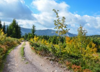 Vom Ufer des Biogradsko Jezero führt eine Forststraße zu den Regionen um Zekova Glava und Crna Glava auf über 2.000 Metern Seehöhe, Montenegro - © FRASHO / franks-travelbox
