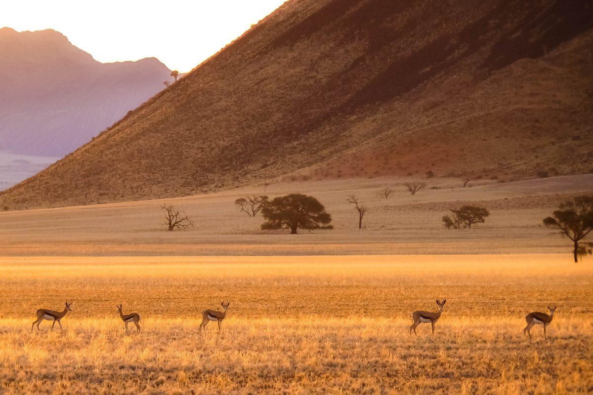 Abendstimmung im Namib-Naukluft-Nationalpark liegt im Südwesten Namibias in der Nähe von Sesrim, Namibia - © FRASHO / franks-travelbox