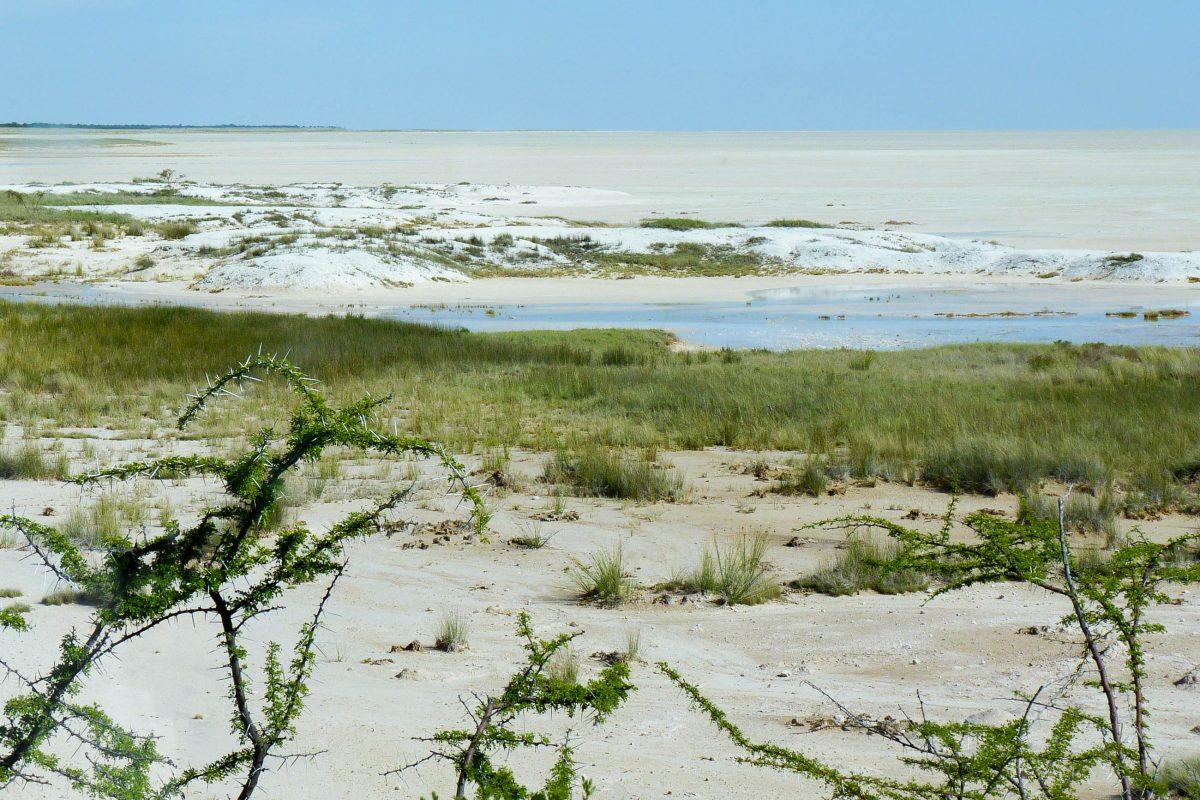 Blick in die Etosha-Salzpfanne mit einer Länge von 130 und einer Breite von 70km im gleichnamigen Etosha-Nationalpark, Namibia - © FRASHO / franks-travelbox