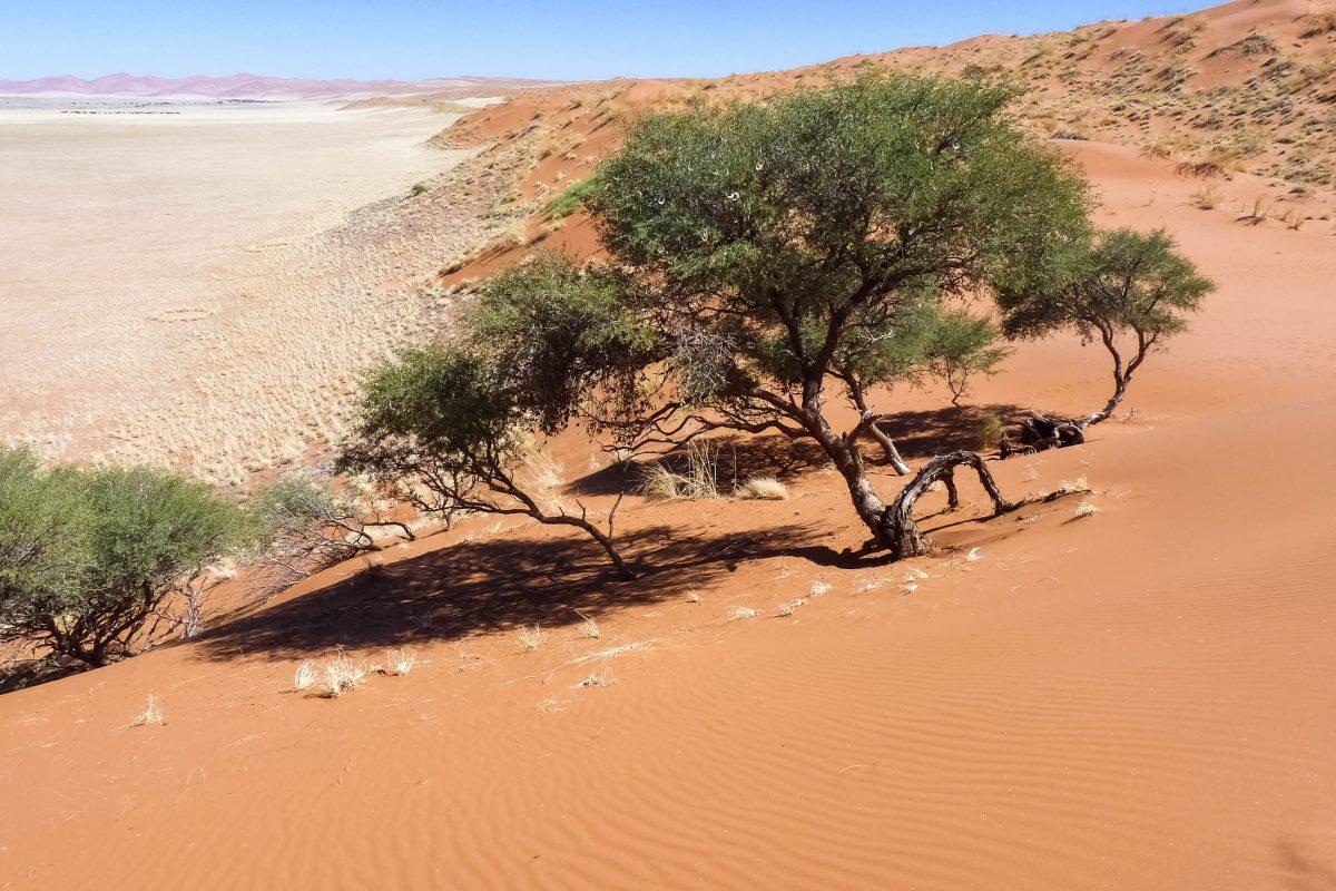 Blick von der Elimdüne nicht weit vom Parkeingang in Sossusvlei , die einen kleinen Vorgeschmack auf die spektakulären Dünen des Sossusvlei gibt, Namibia - © FRASHO / franks-travelbox