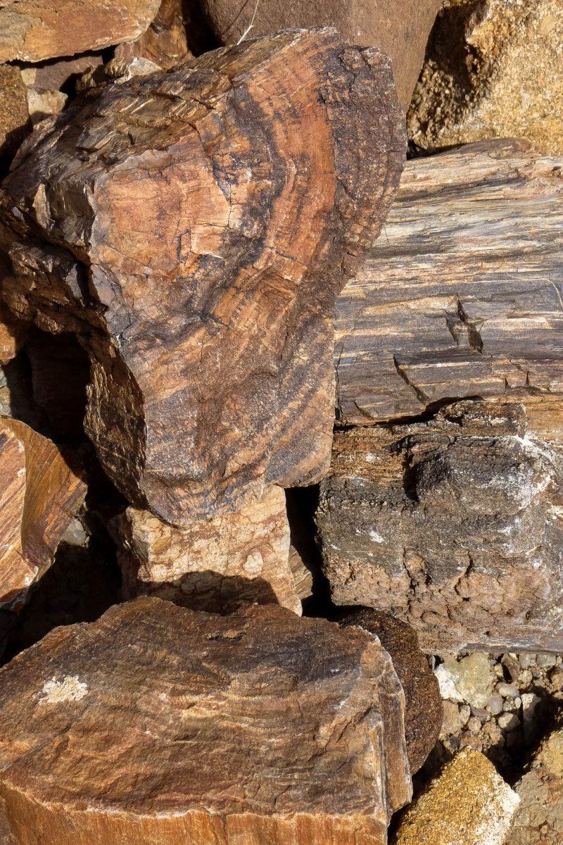 Details der unglaublich gut erhaltenen Fossilien im vewrsteinerten Wald in Namibia - © FRASHO / franks-travelbox
