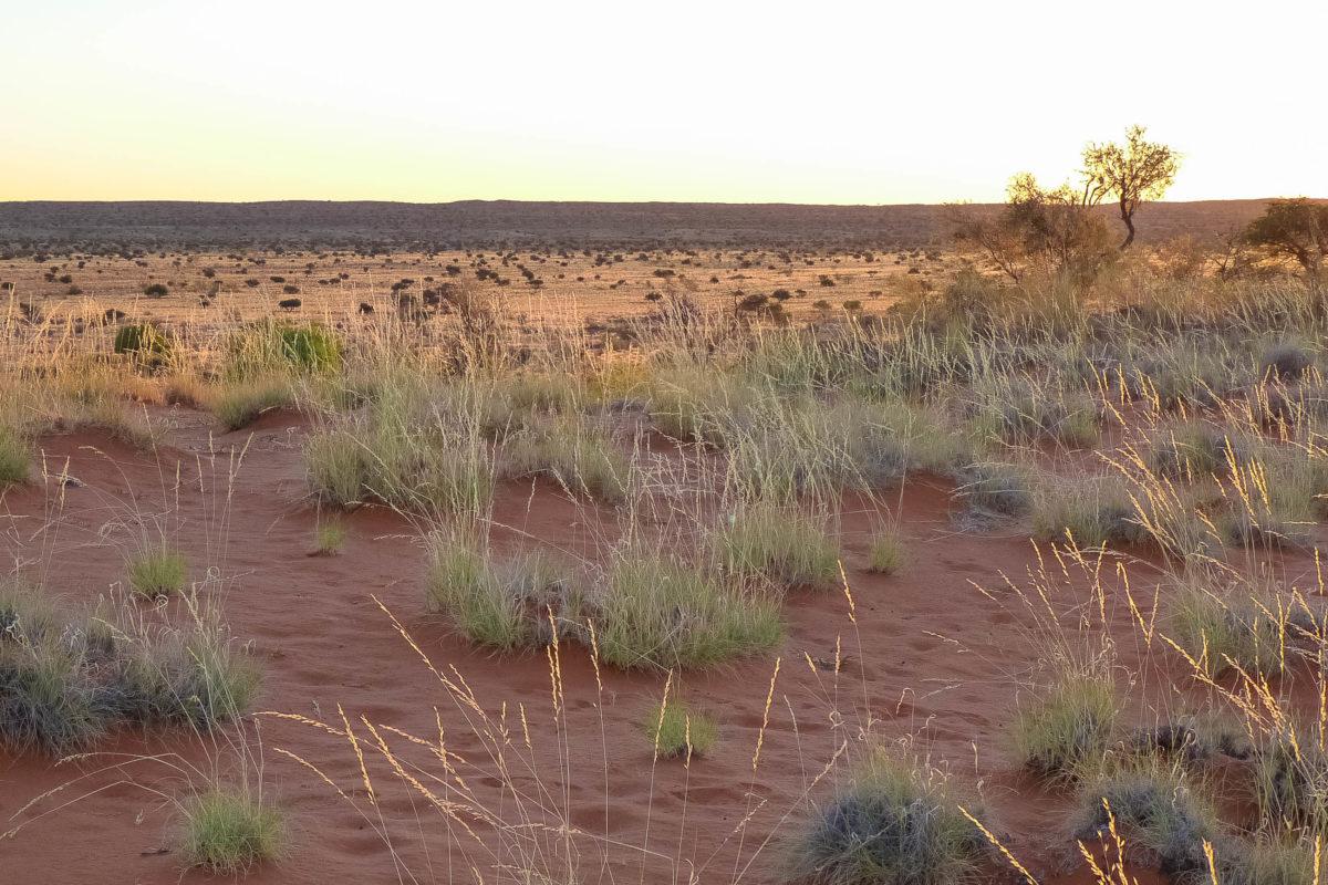 Die Kalahari erstreckt sich im Süden von Afrika über die Länder Südafrika, Namibia, Botswana und Angola und ist eine der größten Sandwüsten der Welt - © FRASHO / franks-travelbox