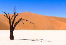 Eine abgestorbene Akazie im Deadvlei am Ende des Sossusvlei in Namibia - © FRASHO / franks-travelbox