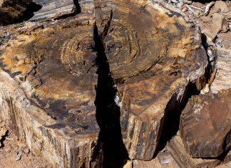 Zeitzeugen einer vergangenen Epoche im versteinerten Wald in Namibia - © FRASHO / franks-travelbox