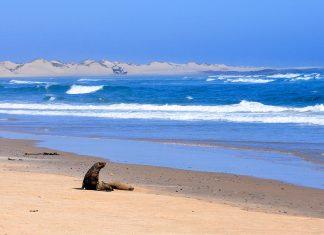 Zwei Seelöwen an der unwirtlichen Skelettküste in Namibia - © Jiri Haureljuk / Shutterstock