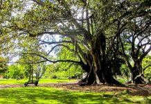 Der Albert Park in Auckland zwischen Kitchener Street und Princes Street wurde nach dem Prinzgemahl von Königin Victoria benannt, Neuseeland - © FRASHO / franks-travelbox
